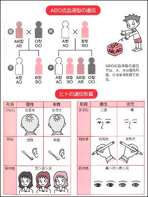 ABC式血液形遺伝の図