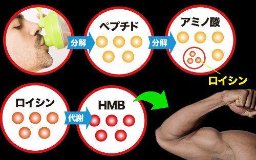 プロテインが体内に届くまでのプロセス