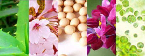 アロエ、桜、大豆、葛、クロレラの写真