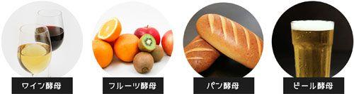4種類の酵母
