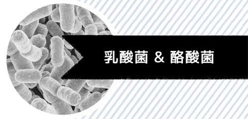 乳酸菌&酪酸菌イメージ
