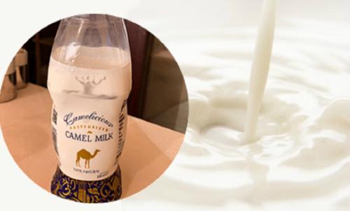 ラクダミルクのイメージ