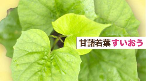 すいおう(甘藷若葉)の葉