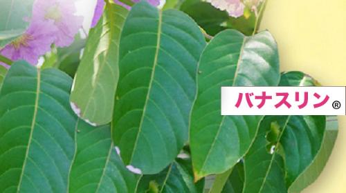バナバの花と葉